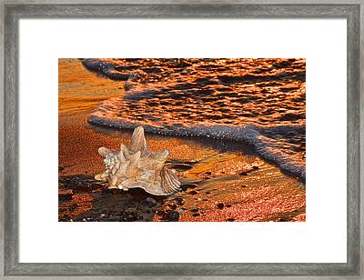 Sunlights Glow Framed Print by Frozen in Time Fine Art Photography