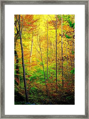 Sunlights Warmth Framed Print by Frozen in Time Fine Art Photography