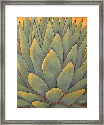 Sunlit Agave Framed Print
