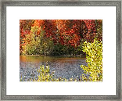 Sunlit Autumn Framed Print by Ann Horn