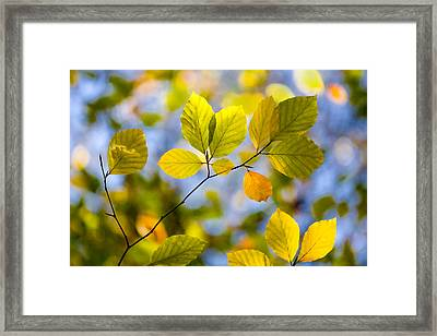 Sunlit Autumn Leaves Framed Print by Natalie Kinnear