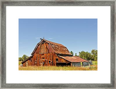 Sunlit Barn Framed Print by Sue Smith