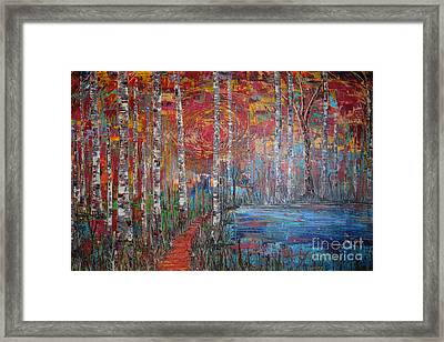 Sunlit Birch Pathway Framed Print by Jacqueline Athmann