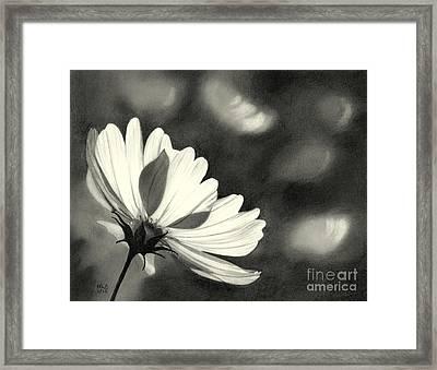 Sunlit Daisy Framed Print by Nicola Butt
