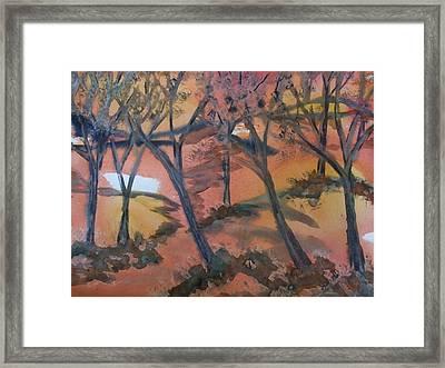 Sunlit Forest Framed Print