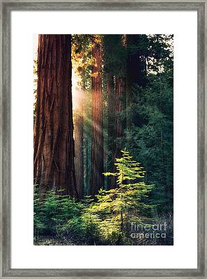 Sunlit From Heaven Framed Print by Jane Rix