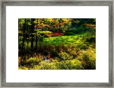 Sunlit Glade Framed Print