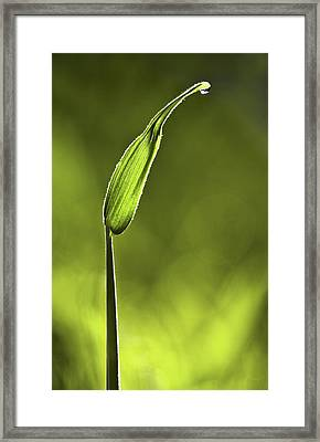 Sunlit Grass And Dew Drop Framed Print by Natalie Kinnear