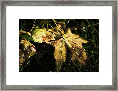 Sunlit Green Leafs Framed Print