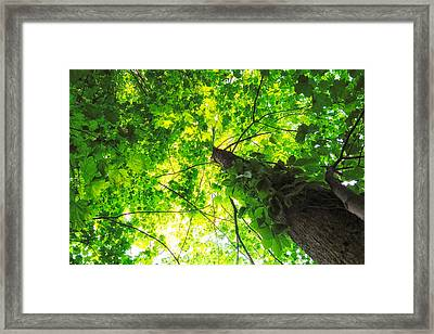 Framed Print featuring the photograph Sunlit Leaves by Lars Lentz