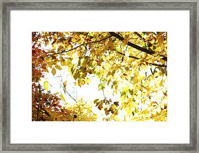 Sunlit Leaves Framed Print by Les Cunliffe