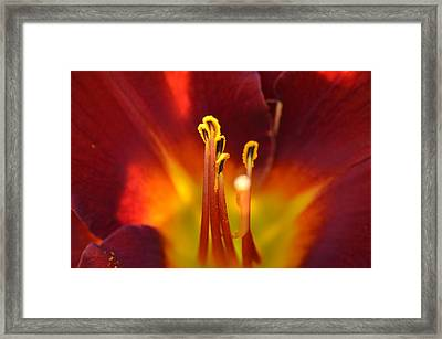 Framed Print featuring the photograph Sunlit Lily by David Porteus