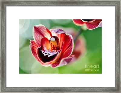 Sunlit Miniature Orchid Framed Print