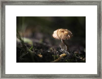 Sunlit Mushroom Framed Print