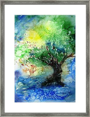 Sunlit Olive Tree In Skiathos  Framed Print by Trudi Doyle