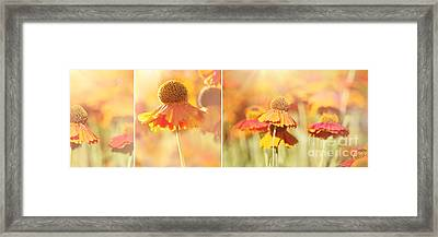 Sunlit Orange Helenium Flowers Triptych Framed Print by Natalie Kinnear