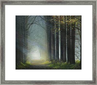 Sunlit Path Framed Print