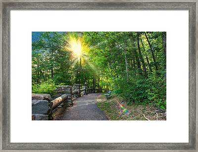 Sunlit Path Framed Print