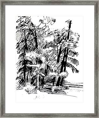 Sunlit Pines And Hemlocks Framed Print by Deborah Dendler