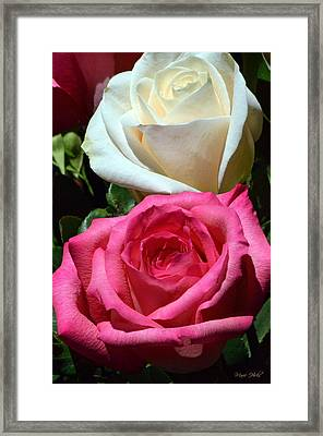 Sunlit Roses Framed Print by Marie Hicks