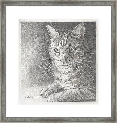 Sunlit Tabby Cat Framed Print by Victoria Lisi