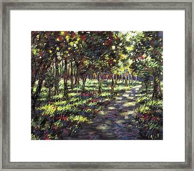 Sunlit Trees Framed Print by John  Nolan