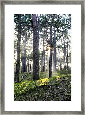 Sunlit Trees Framed Print