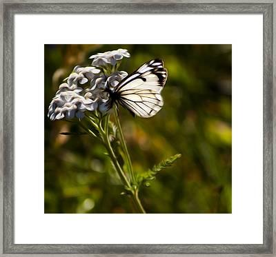 Sunlit Wings Framed Print