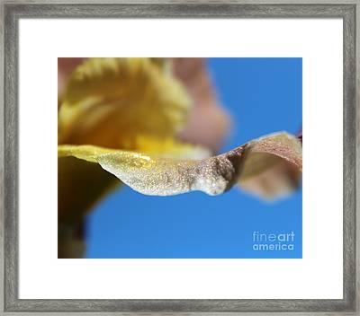 Sunlit Wonder Framed Print