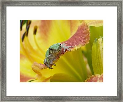 Sunning In A Day Lily Framed Print