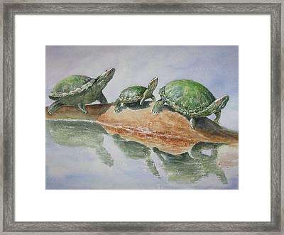 Sunning Turtles Framed Print
