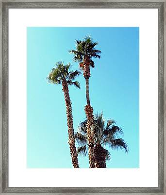 Sunny Afternoon Framed Print by Dietmar Scherf