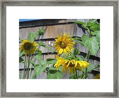 Sunny Afternoon Framed Print