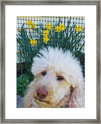 Sunny And The Daffodils Framed Print by Judy Via-Wolff
