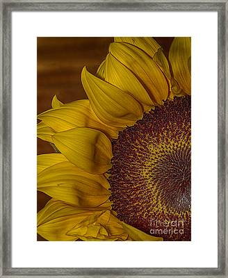 Sunny Framed Print by Anne Rodkin