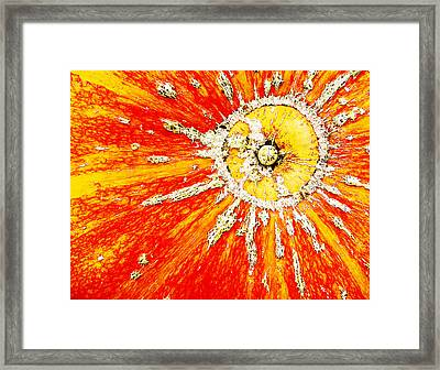 Framed Print featuring the photograph Sunny by Arkady Kunysz