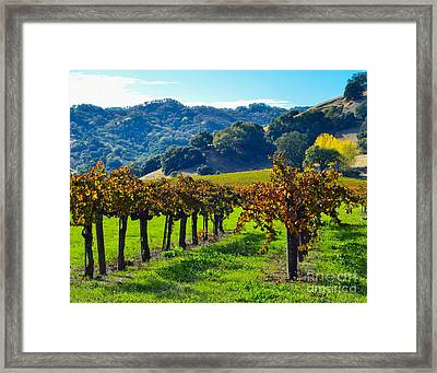 Sunny Autumn Vineyards Framed Print by CML Brown