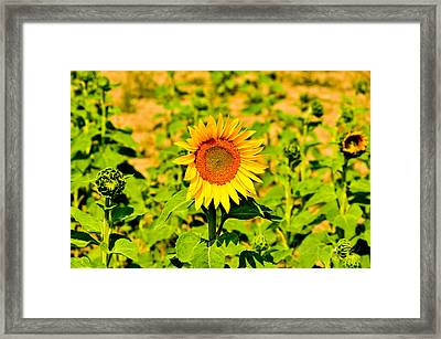 Sunny Framed Print by BandC  Photography