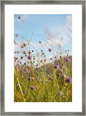 Sunny Bliss. Rest And Be Thankful. Scotland Framed Print by Jenny Rainbow
