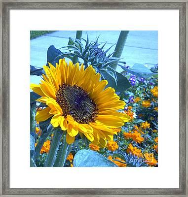 Sunny Blue Framed Print by Arlene Carmel