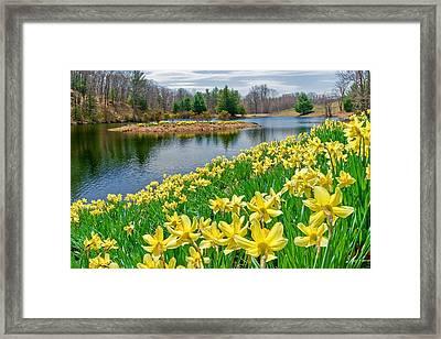 Sunny Daffodil Framed Print