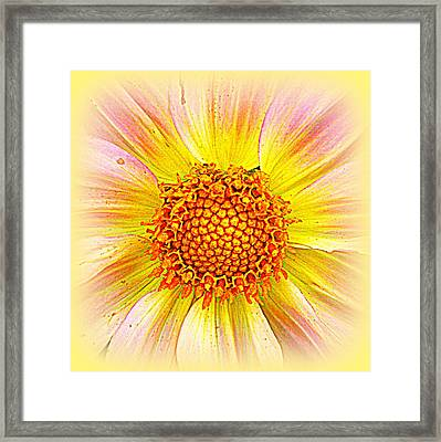 Sunny Dahlia Framed Print by The Creative Minds Art and Photography