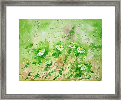 Sunny Daisies Framed Print by Zaira Dzhaubaeva