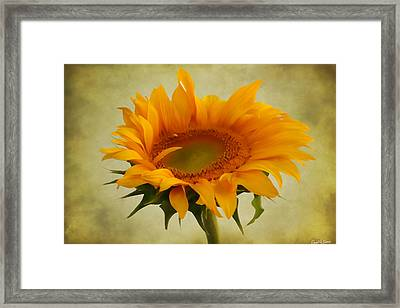 Sunny Framed Print by David Simons