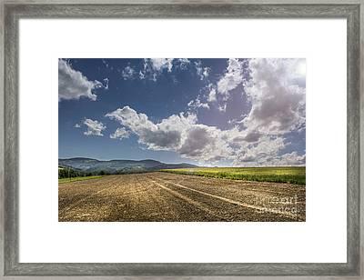Sunny Day Framed Print by Bruno Santoro