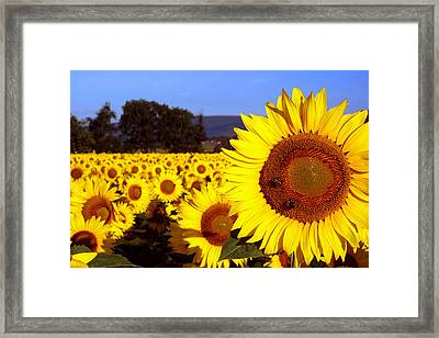 Sunny Day II Framed Print by Meaghan Troup