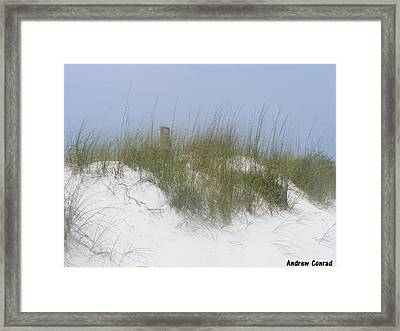 Sunny Day In Florida  Framed Print by Andrew Conrad