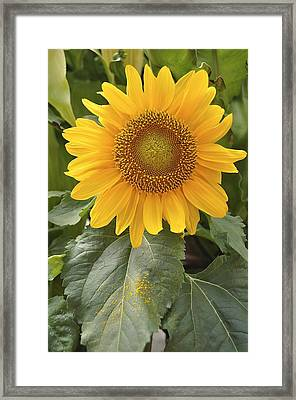 Framed Print featuring the photograph Sunny Day by Sandy Molinaro