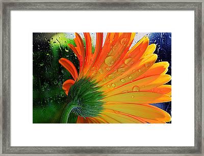 Sunny Days Ahead...... Framed Print