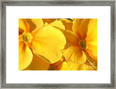 Sunny Disposition Framed Print by Chris Anderson